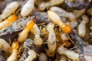 Pest Control Byron Bay