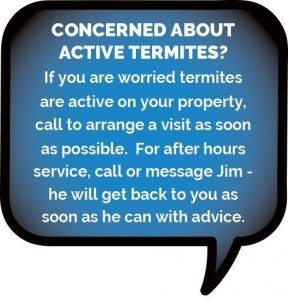 Concerned about active termites?