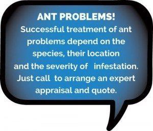 Ant control byron bay