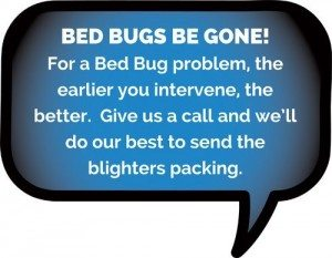 Bed Bugs Byron Bay