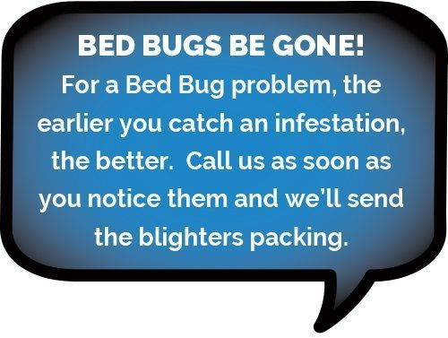 Bed-Bug Treatments more common