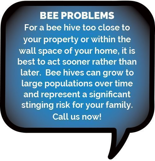 www.activepest.com.au/bees-wasps