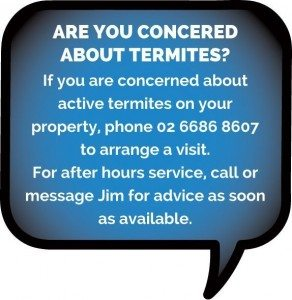 Termites Tweed Heads
