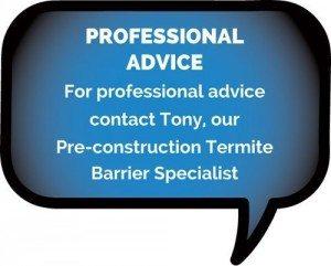 Professional Termite Advice Byron Bay