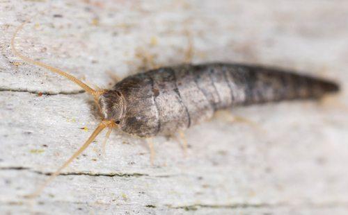 termite control ballina