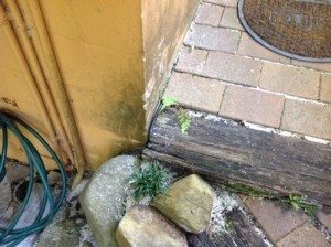 Butting timber fixtures to external walls may bridge a path for termites - Ballina Pest Control