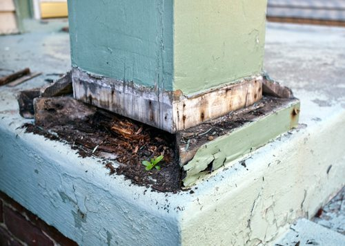 Termite Inspections and Pre-purchase Inspections, Ballina
