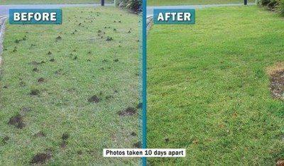 Funnel Ants www.activepest.com.au