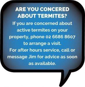 Termites Tweed Heads