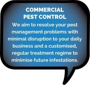 Commercial Pest control byron bay