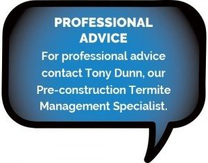 Professional Termite Management advice