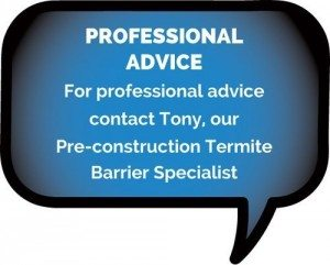 Professional Termite Advice Byron Bay