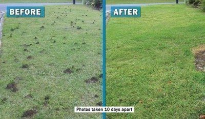 how to get rid of ants nests in your lawn
