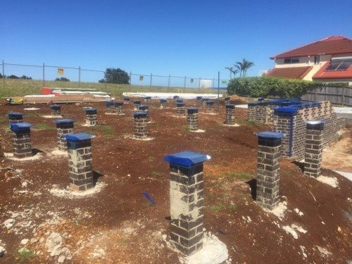 changes to termite management standards - active pest management, ballina